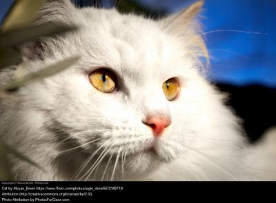 Cat Vocab Slide