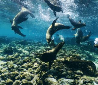 Seals on Galapagos Island